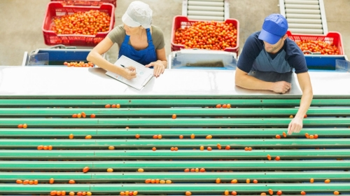 employee-supply-chain-agriculture-495829505